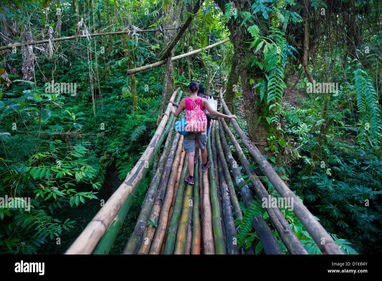 bamboo bridge in the interior leading to millennium cave, island