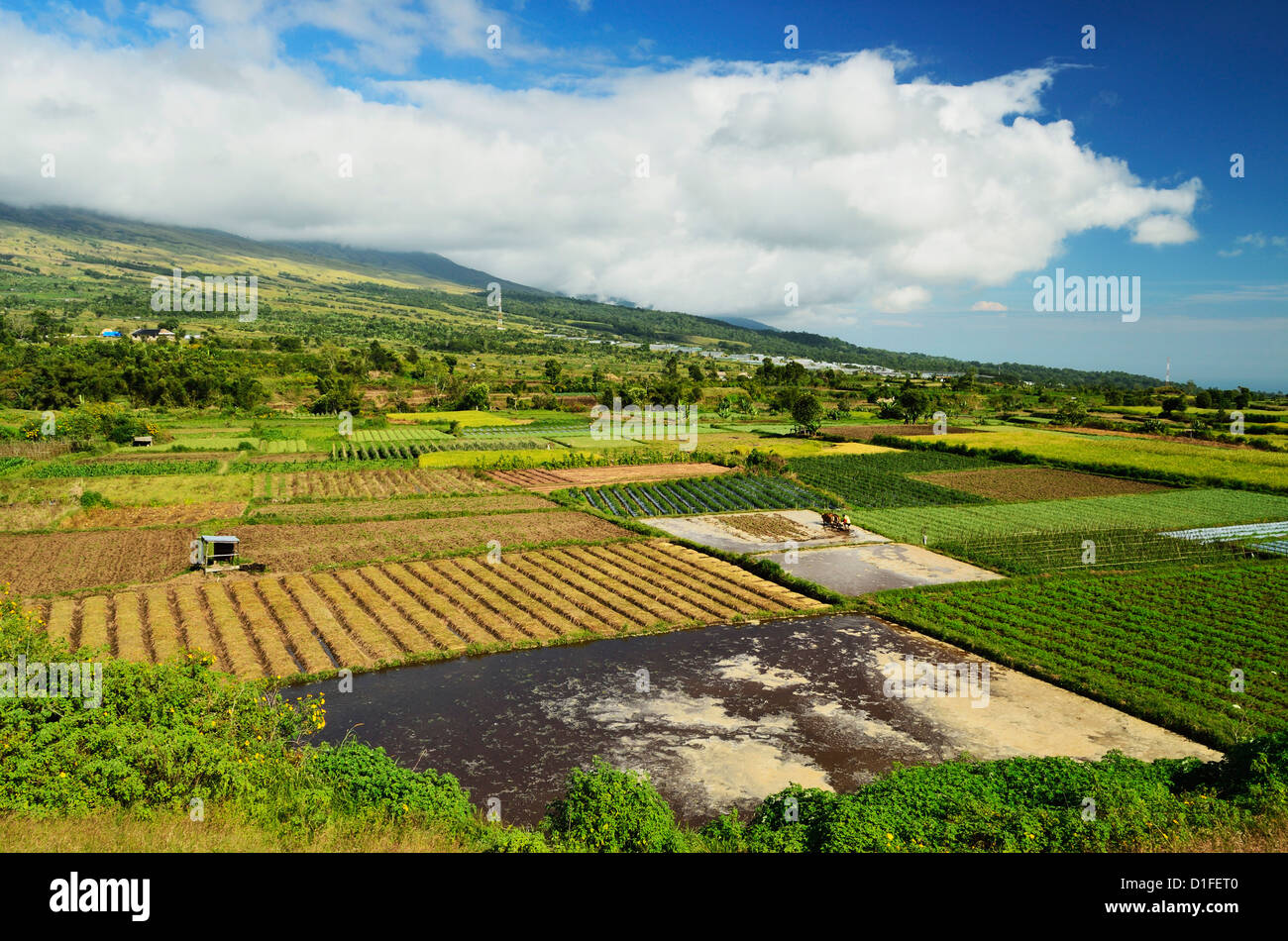 Rural landscape near sembalun lawang lombok indonesia for Nearby landscapers