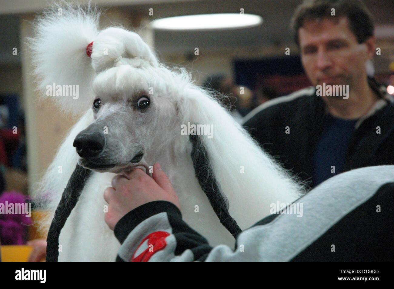 New York City Westminster Kennel Dog Show Madison Square Garden Stockfoto Lizenzfreies Bild
