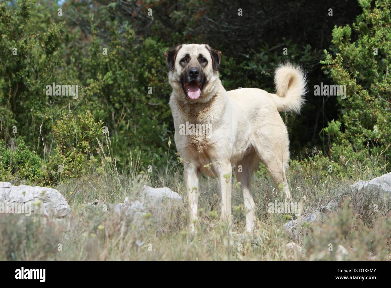 Dog Breed Definition