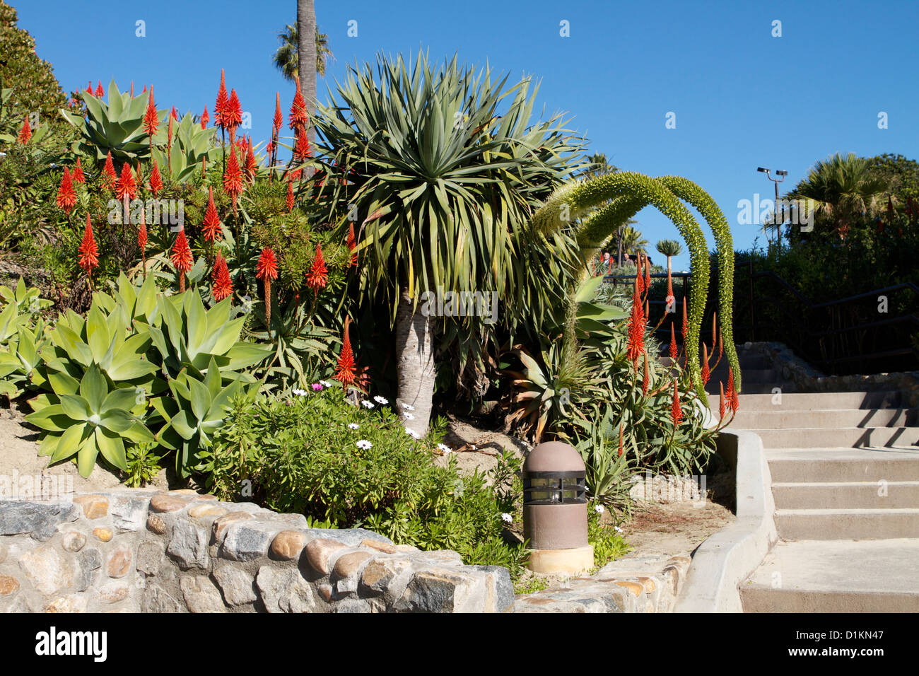 Aloe Vera And Tropical Plants Blooming In Heisler Park Laguna Beach California