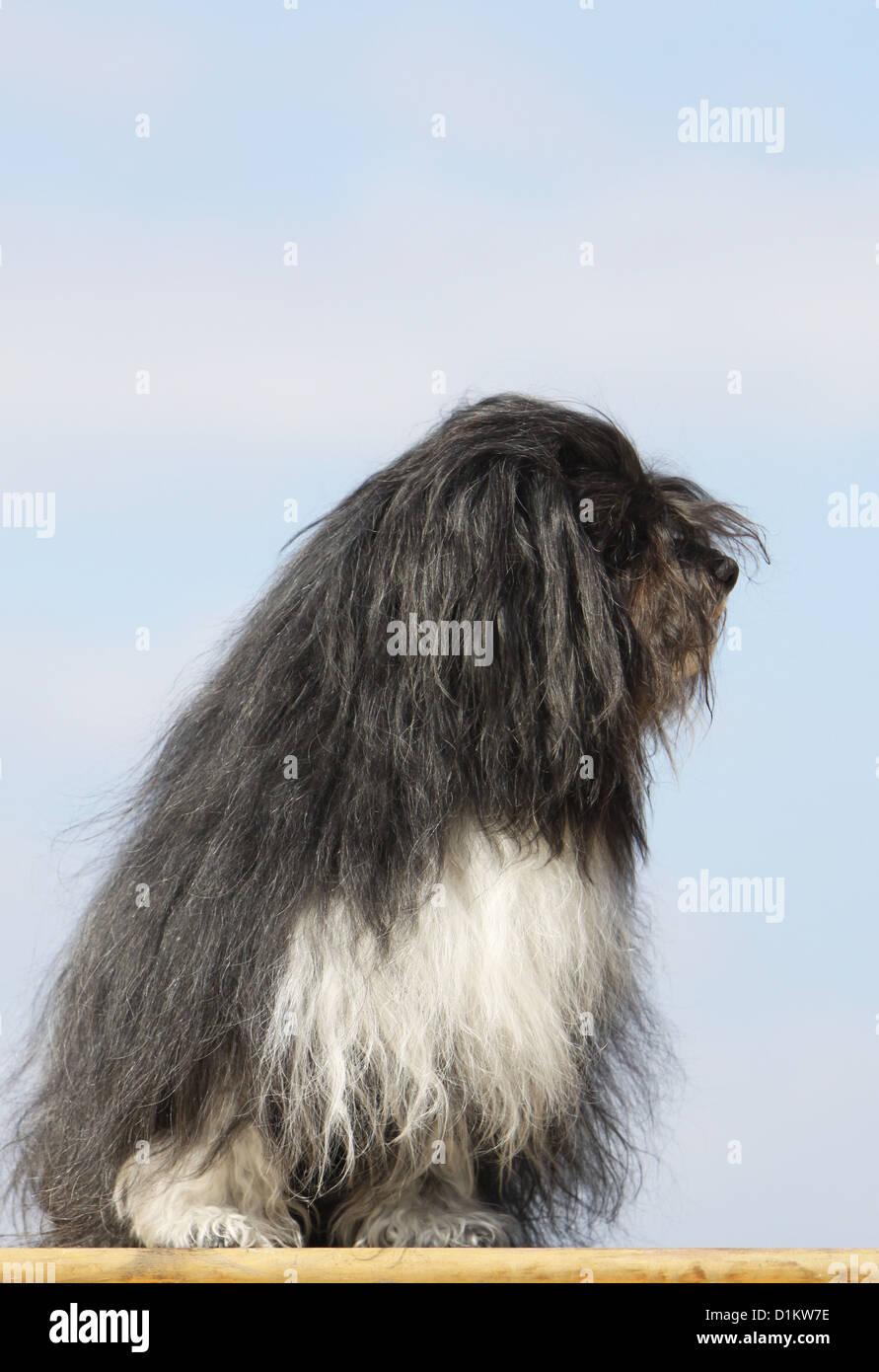 Lion sitting profile - photo#7
