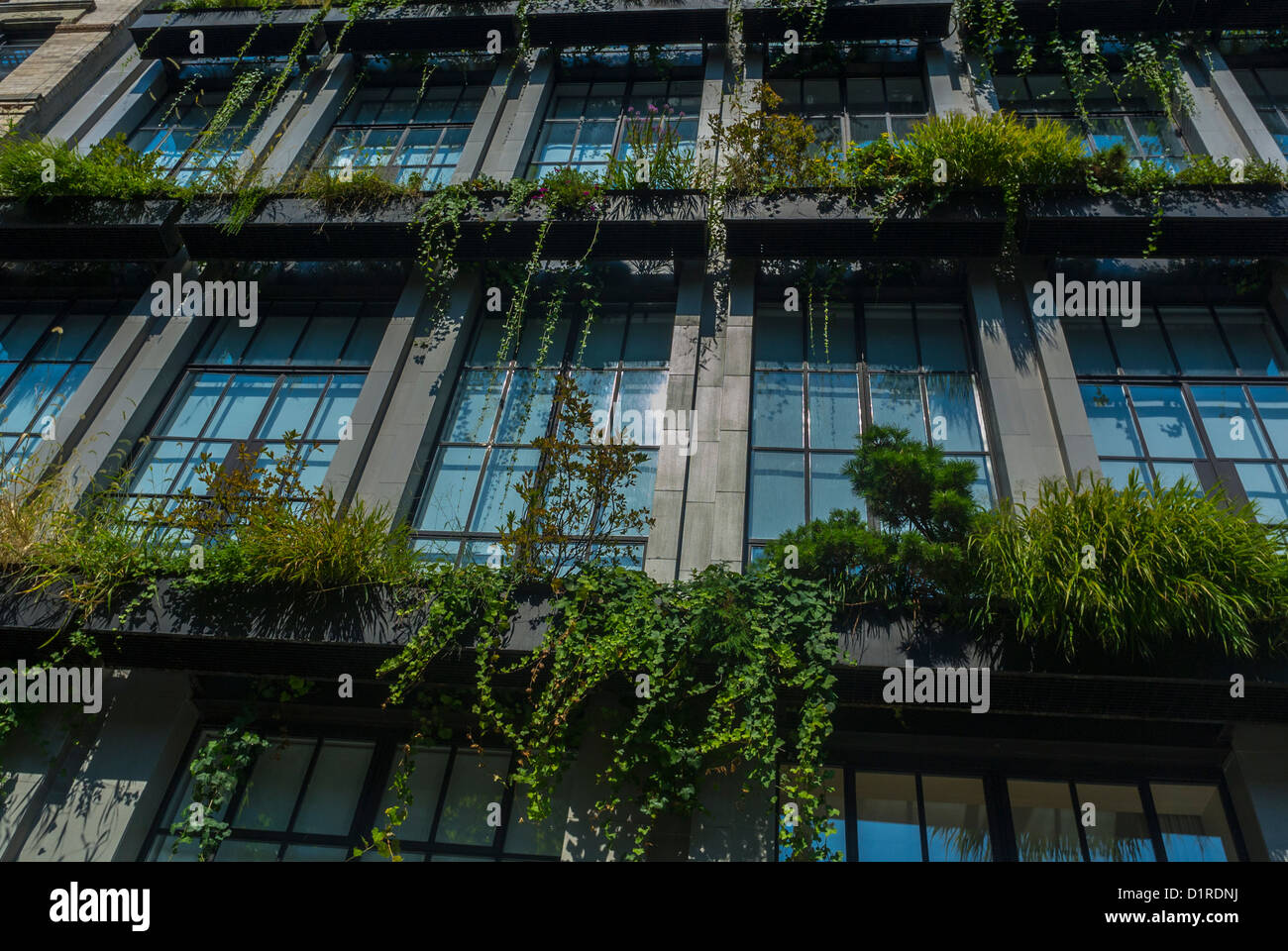 New York, NY, USA, Detail, Facade with Vertical Garden Plants, WIndows,  East Village Buildings (E. 6th St.)