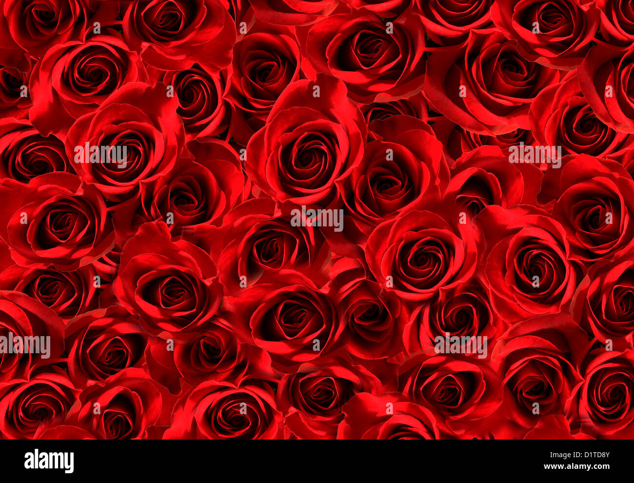 A lots of red roses texture background symbol of love stock photo a lots of red roses texture background symbol of love buycottarizona
