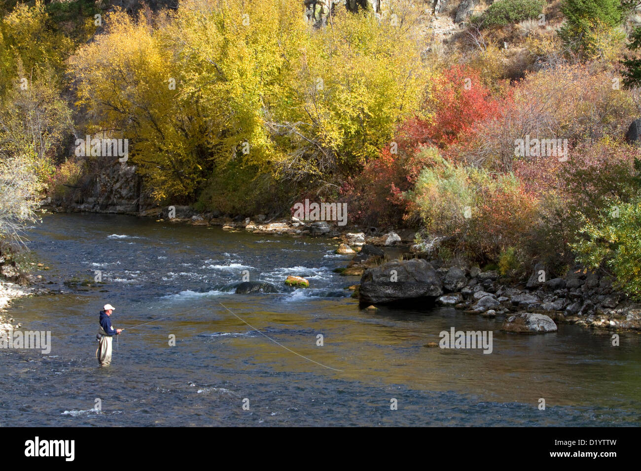 Angler fly fishing on the south fork of the boise river in for Fly fishing boise idaho