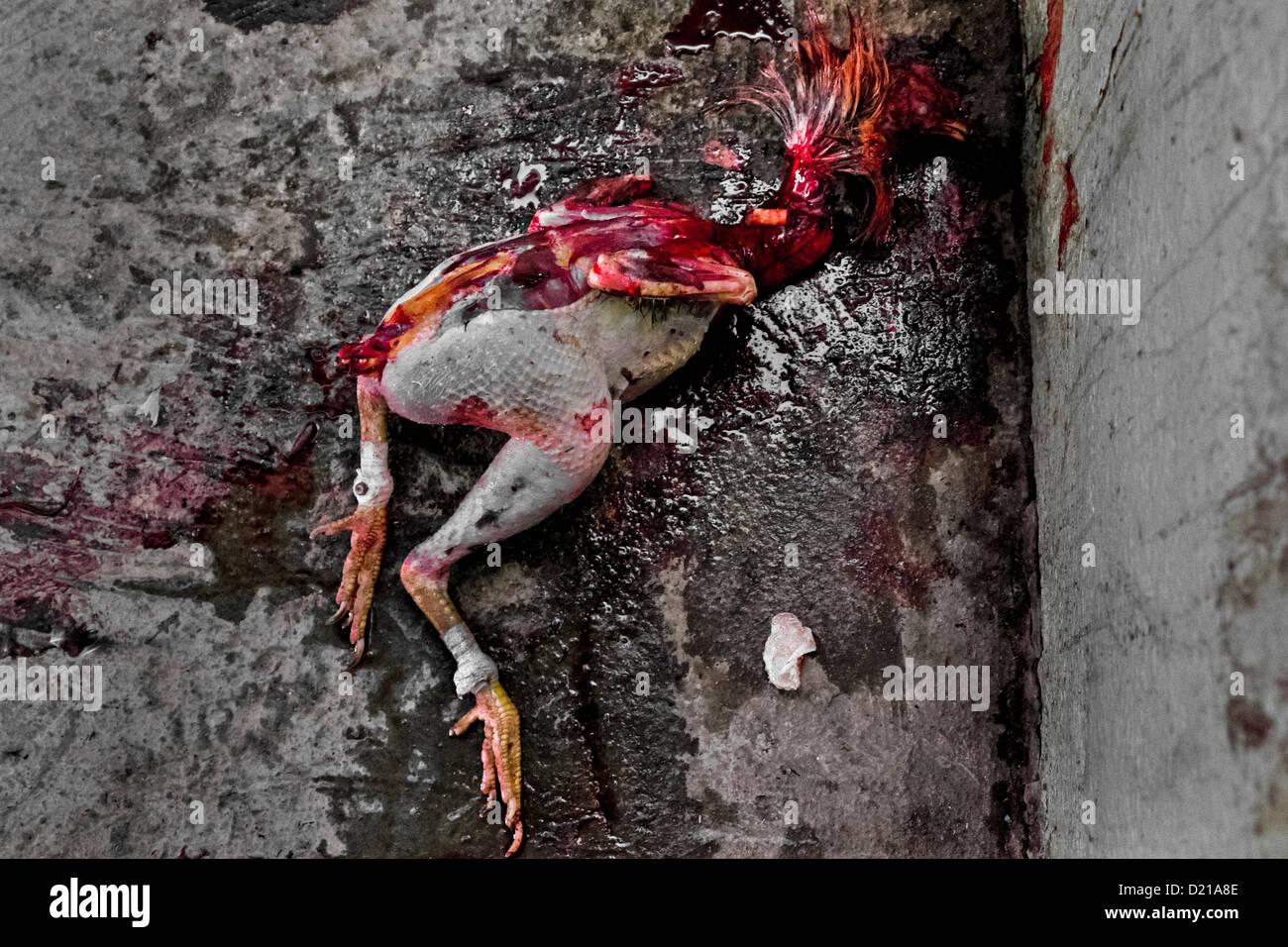 Cock dead picture