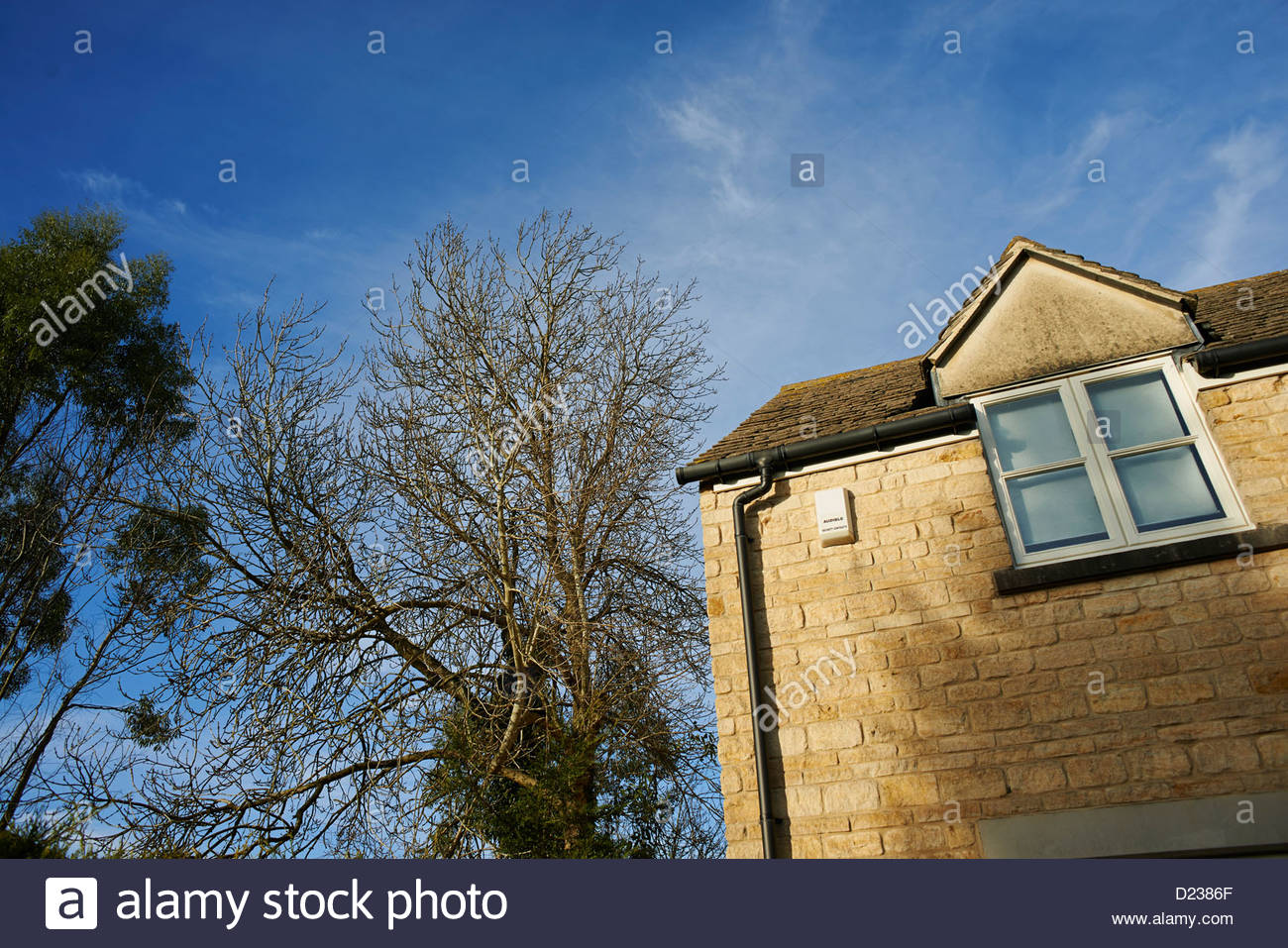 Trees Growing Close To A House That Could Become Damaged