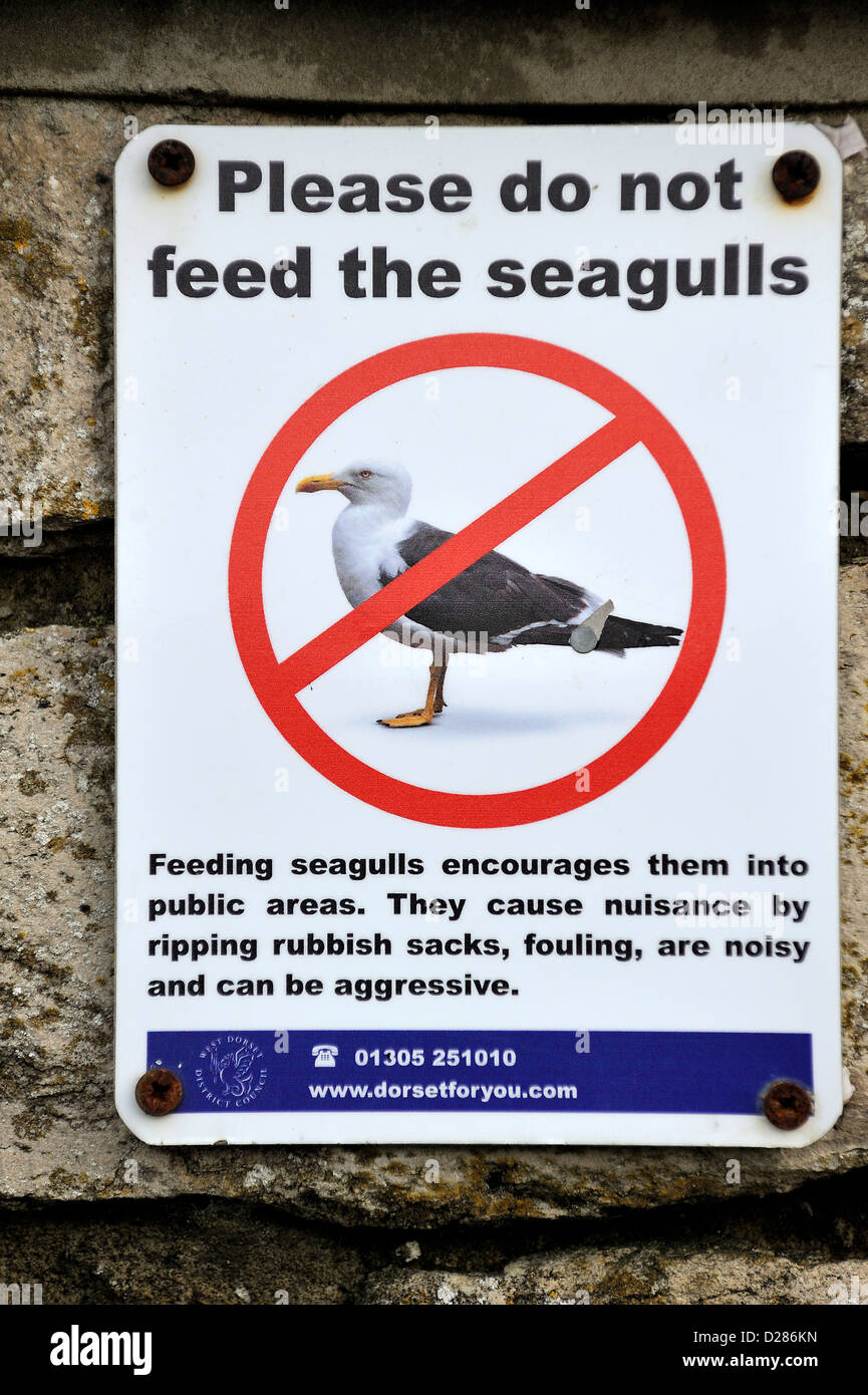 Image result for do not feed seagull