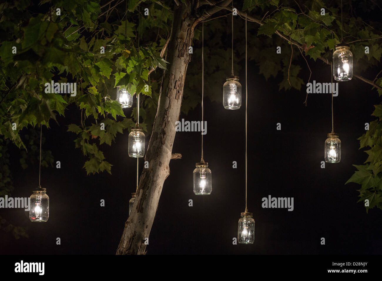 Glowing mason jar lights hanging from a tree stock photo for How to hang string lights on trees