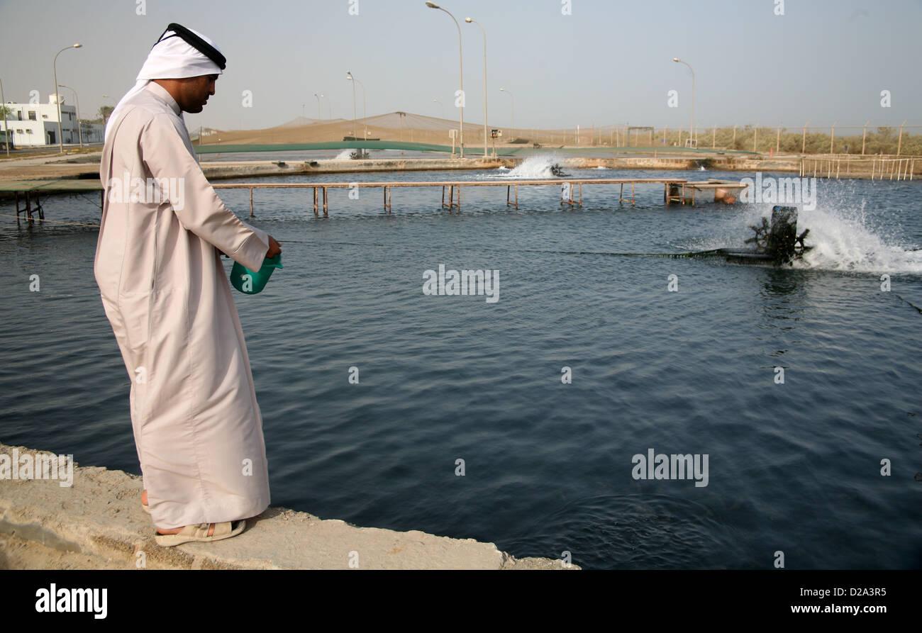 Fish aquarium in umm al quwain - Aquaculture At Marine Research Centre Umm Al Quwain Uae