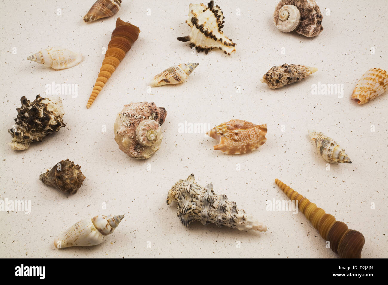 assorted seashells on a sand coloured background stock photo
