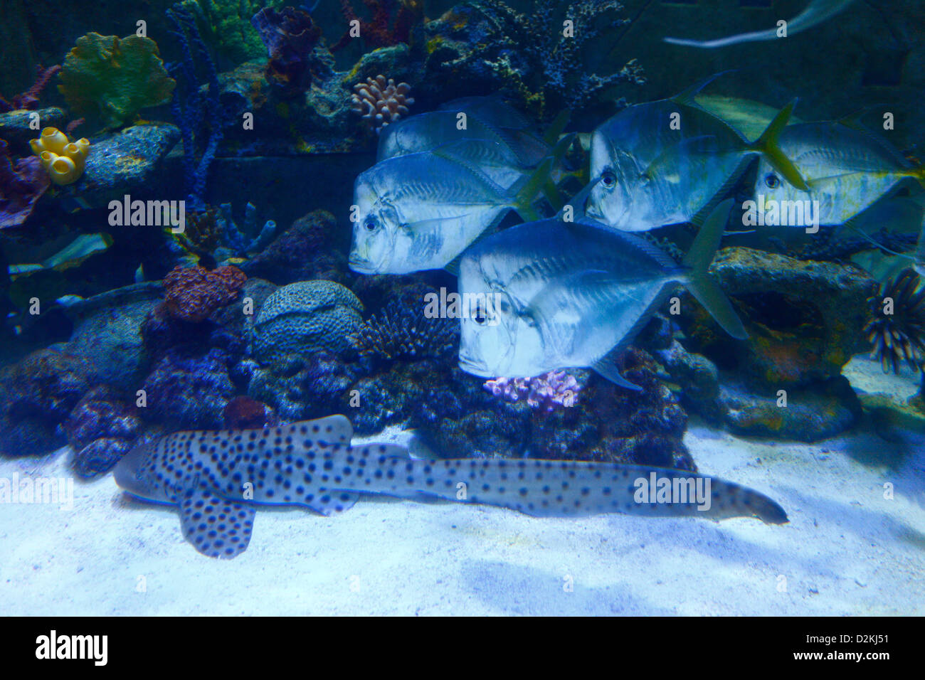 Fish in aquarium atlantis hotel resort nassau bahamas for Fishing nassau bahamas