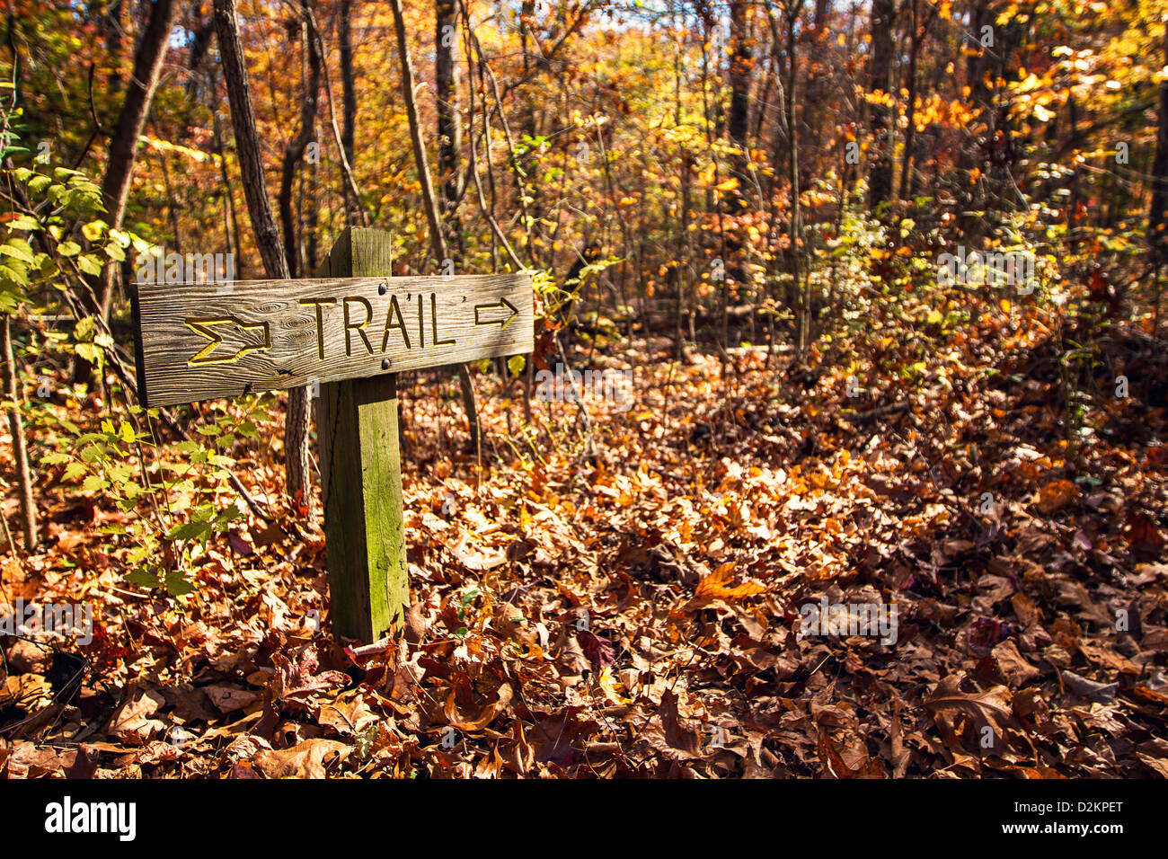 a wooden quottrailquot signs points the way to the hiking trail