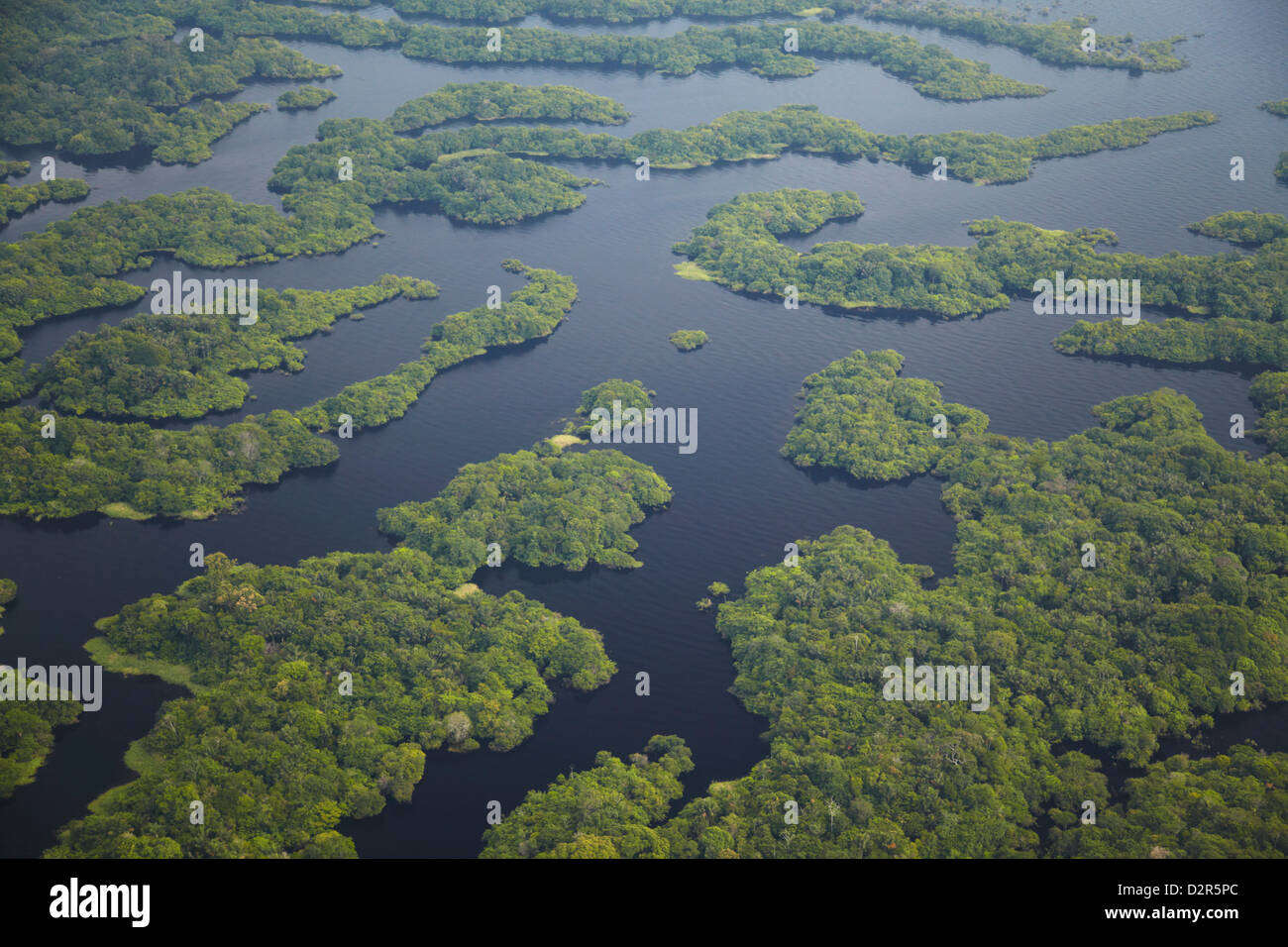 Law in the Amazon - American Forests