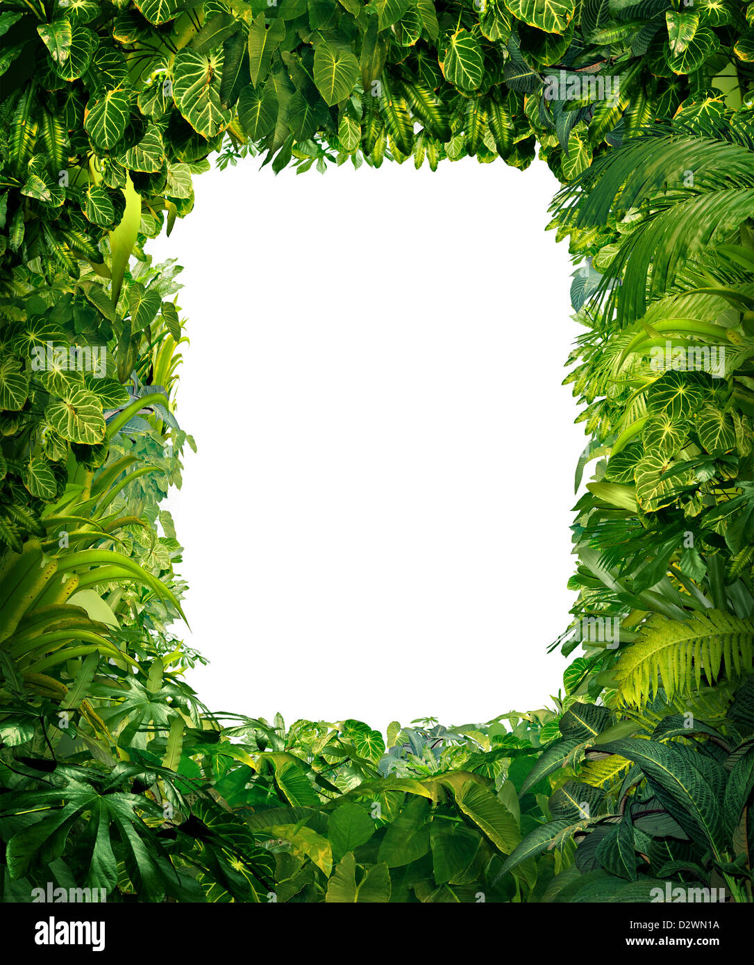 Jungle frame images galleries with a - Marcos para plantas ...
