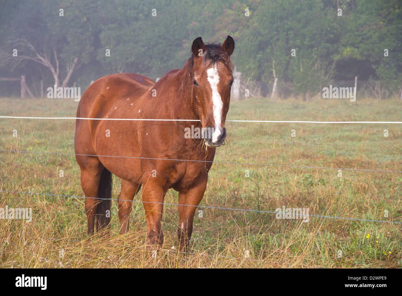 A chestnut horse Stock Photo, Royalty Free Image: 53426865 ... - photo#26