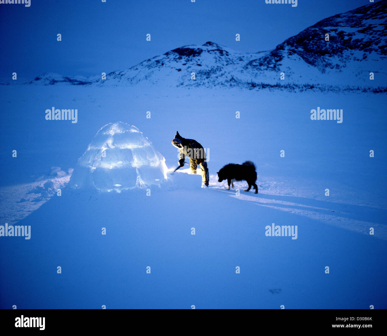 sherman hines inuit man at igloo with dog nain labrador and stock