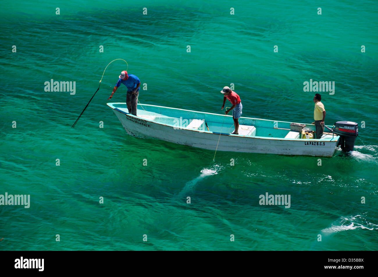 Spear fishing from punga boat sea of cortez baja for Baja california fishing