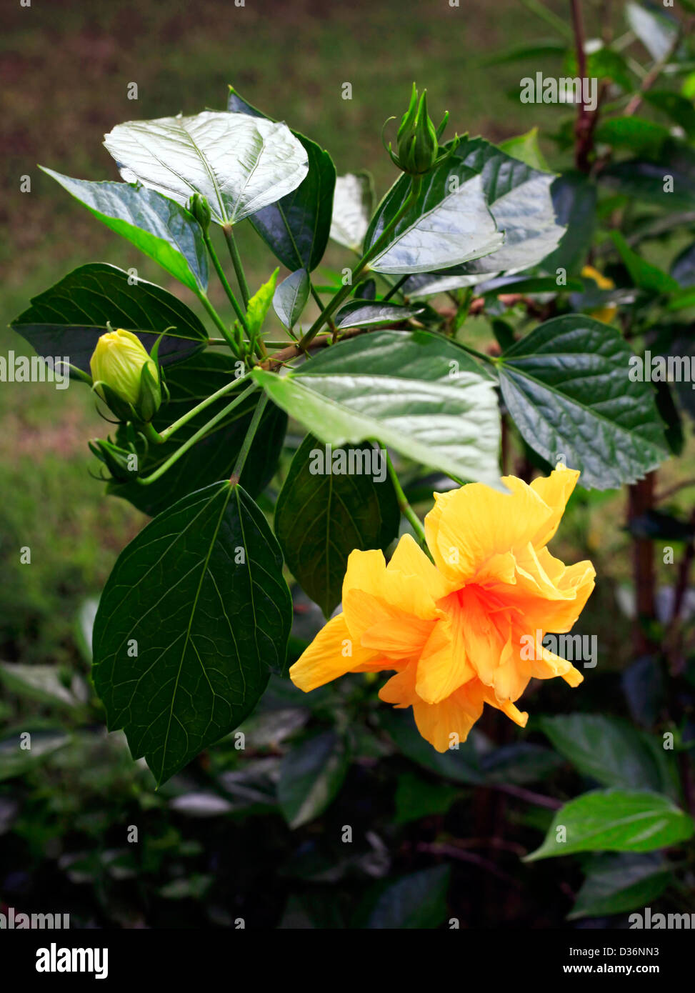 A set of beautiful tropical flower against a natural background a set of beautiful tropical flower against a natural background izmirmasajfo