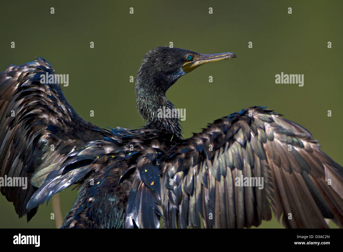 Pole, blackbird, Turdus merula, little men, food, animals, animal ...