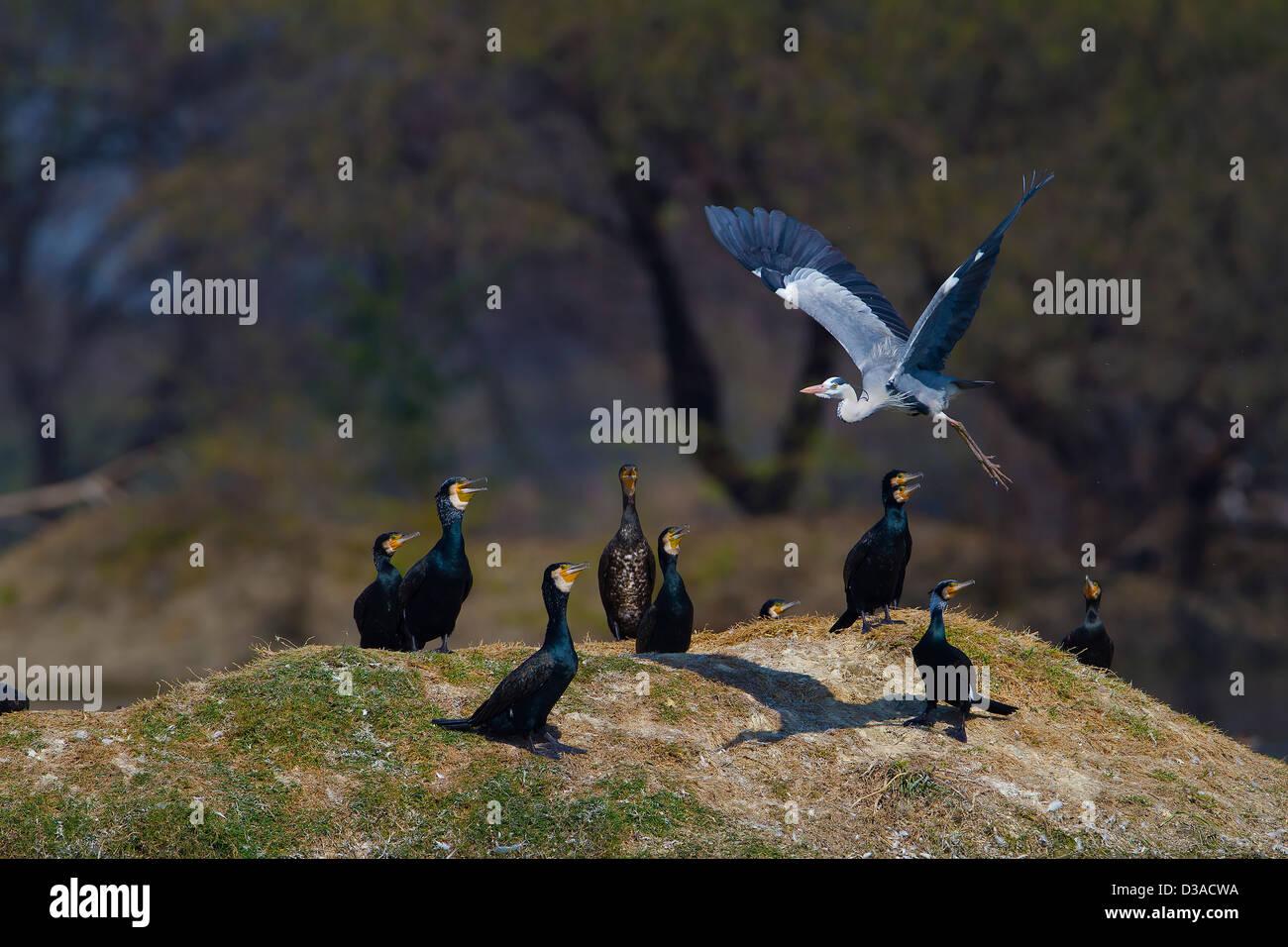Black Bird with Blue eyes | Birds | Animals | Pixoto