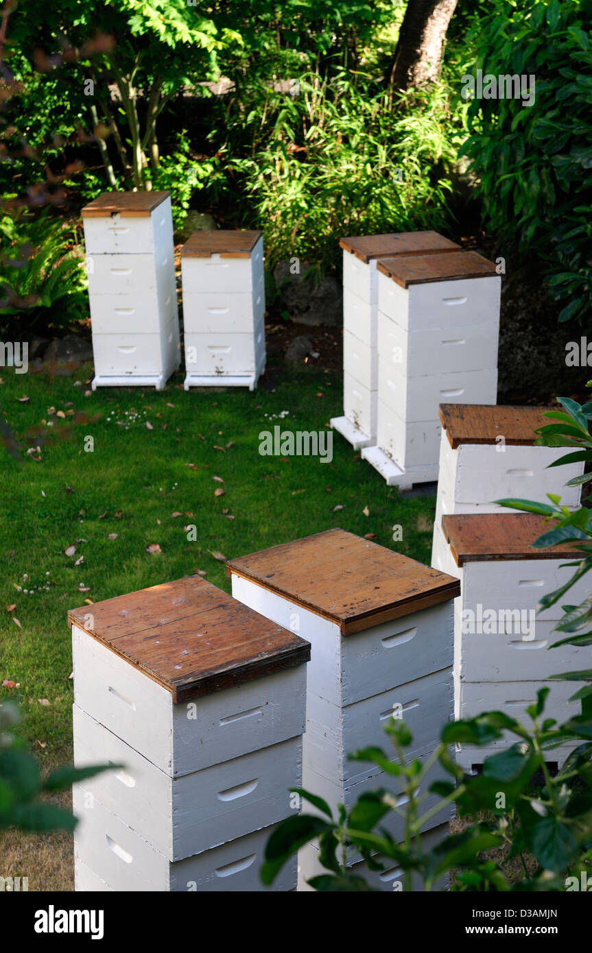 White Painted Wood Wooden Beehives Beehive Apiary Arranged In Semi Circle Garden Gardening Honey Production