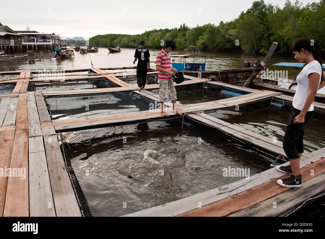 Krabi thailand a fish farm in the krabi river fishing for Fish farm 3