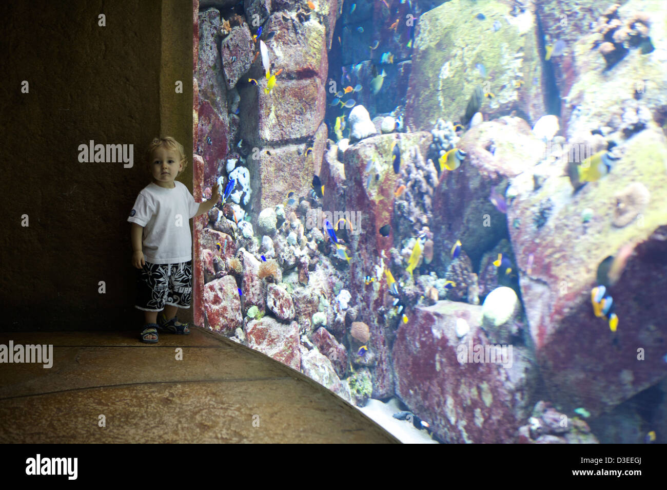 Fish aquarium in uae - A Small Boy In Shorts Stands Next To The Aquarium Fish Tank In The Atlantis Palm Hotel In Dubai Uae