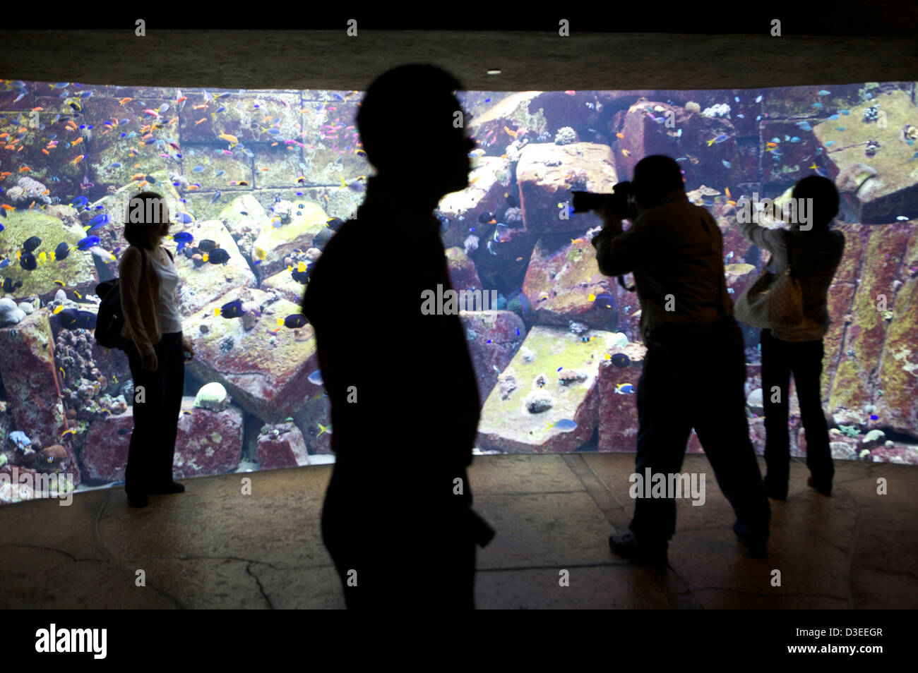 Fish aquarium in uae - Visitor Poses Next To The Aquarium Fish Tank In The Atlantis Palm Hotel Dubai Uae As A Photographer Takes A Picture
