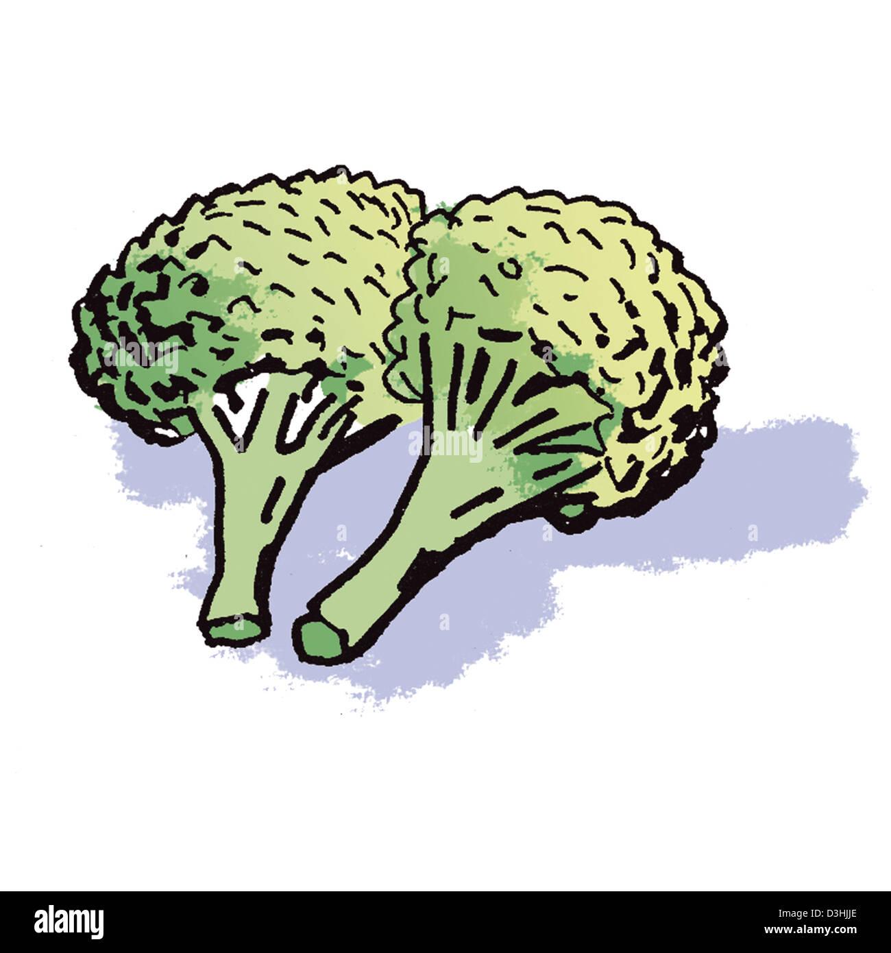 broccoli drawing stock photo royalty free image 53862886 alamy