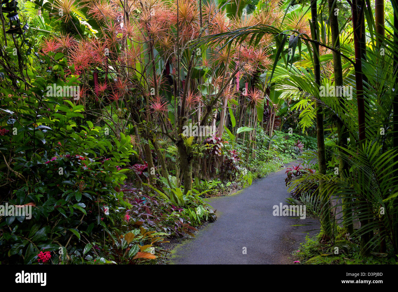 Pathway in hawaii tropical botanical gardens hawaii the for Hilo botanical gardens