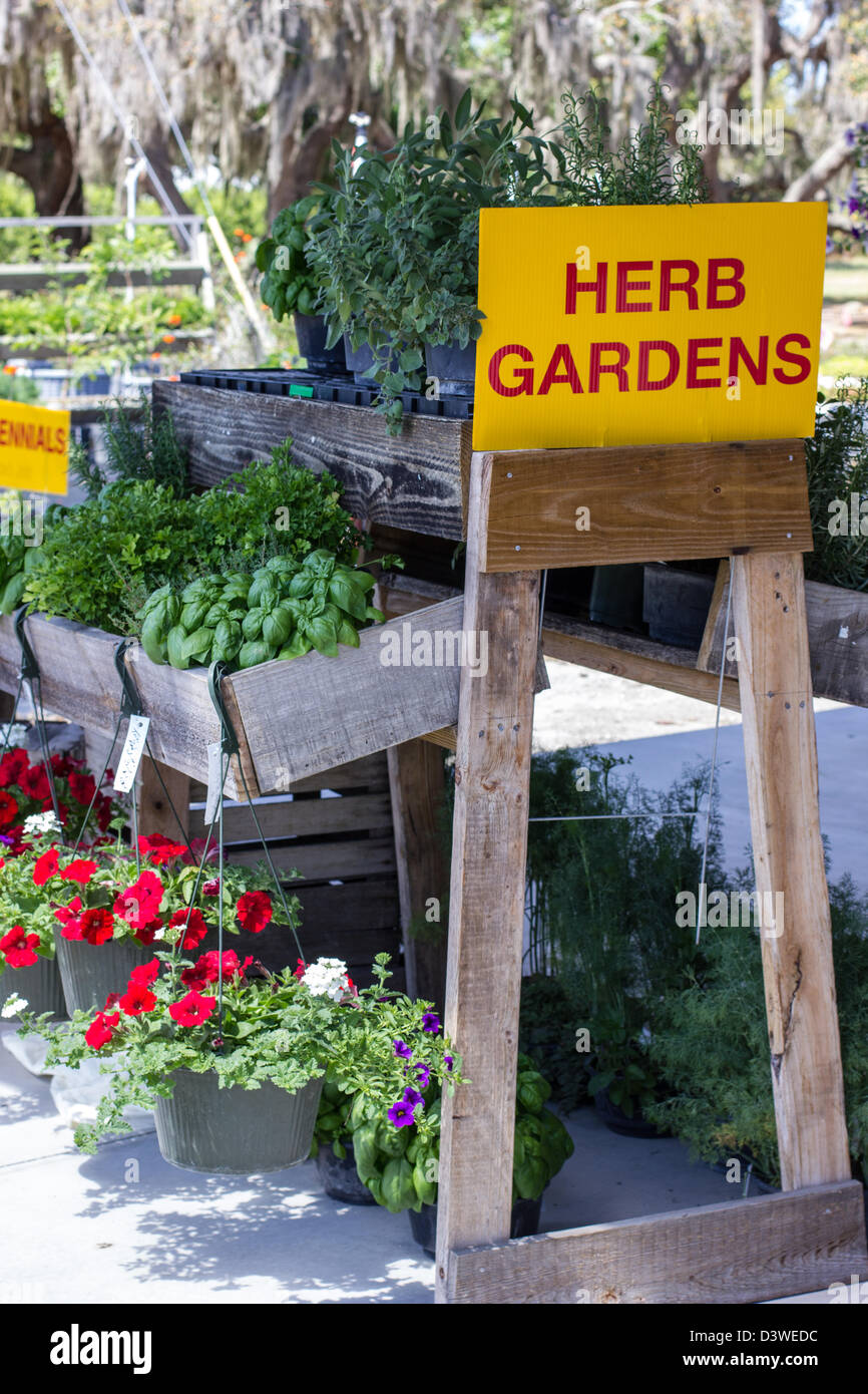 Exceptional Potted Herb Gardens For Sale Display At Farm Market