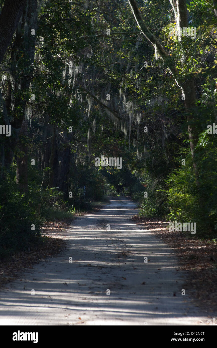 Path with Live Oak Trees and Spanish Moss as a canopy shading the path : canopy spanish - memphite.com