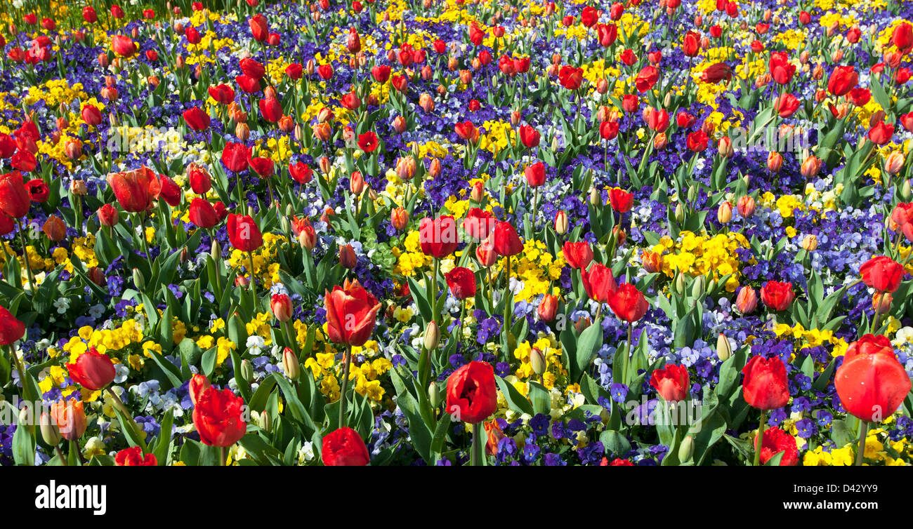 mixed bed of spring flowers and tulips floriade canberra australia