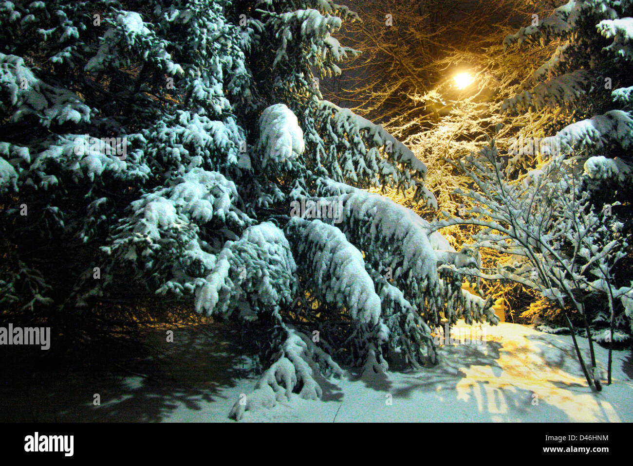 A Night Scene Of Fresh Snowfall On Trees And Tungsten Street Light
