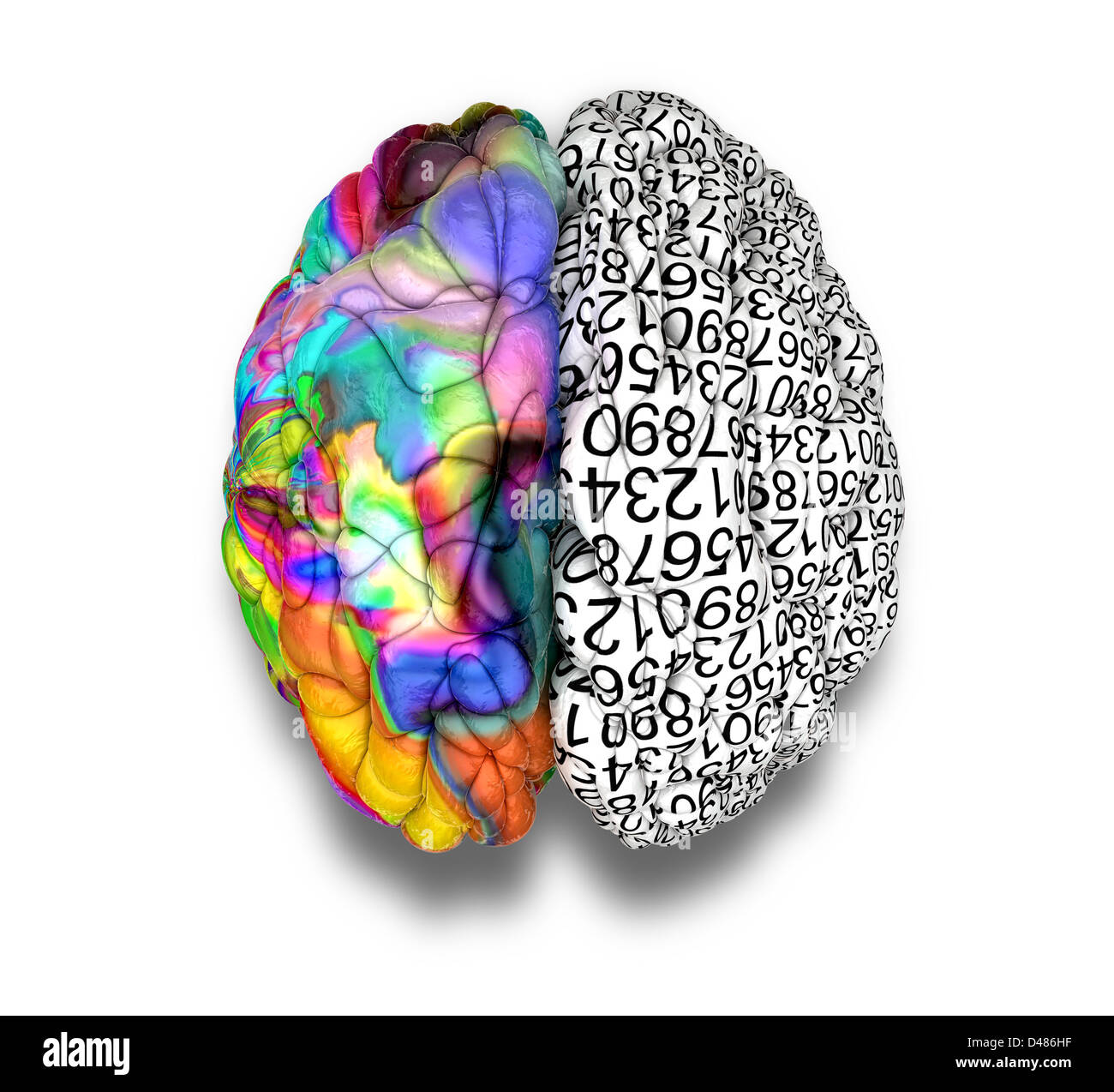 a typical brain the left side depicting an analytical stock a typical brain the left side depicting an analytical structured and logical mind