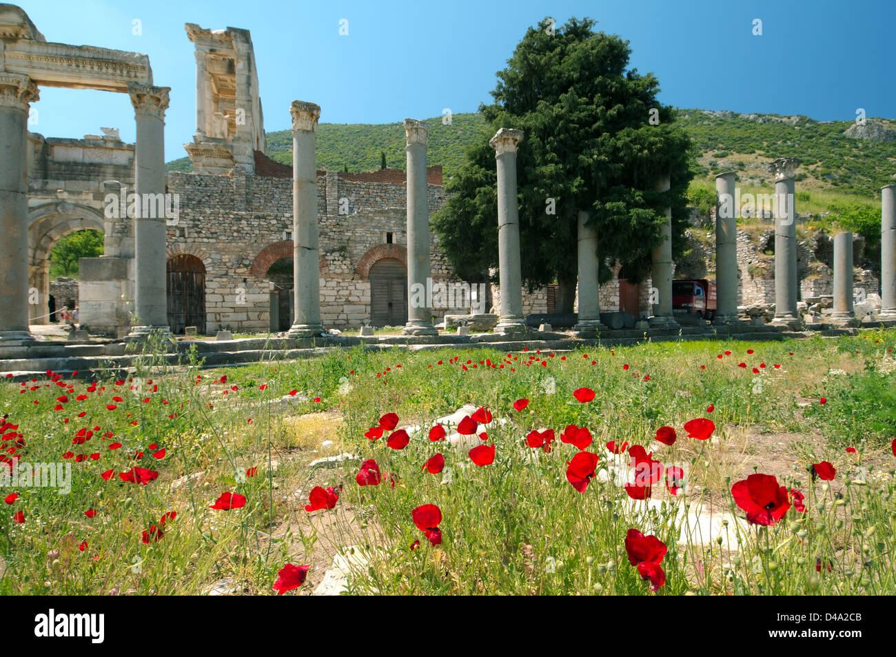 Antique city of ephesus poppy flowers in front turkey western antique city of ephesus poppy flowers in front turkey western asia mightylinksfo