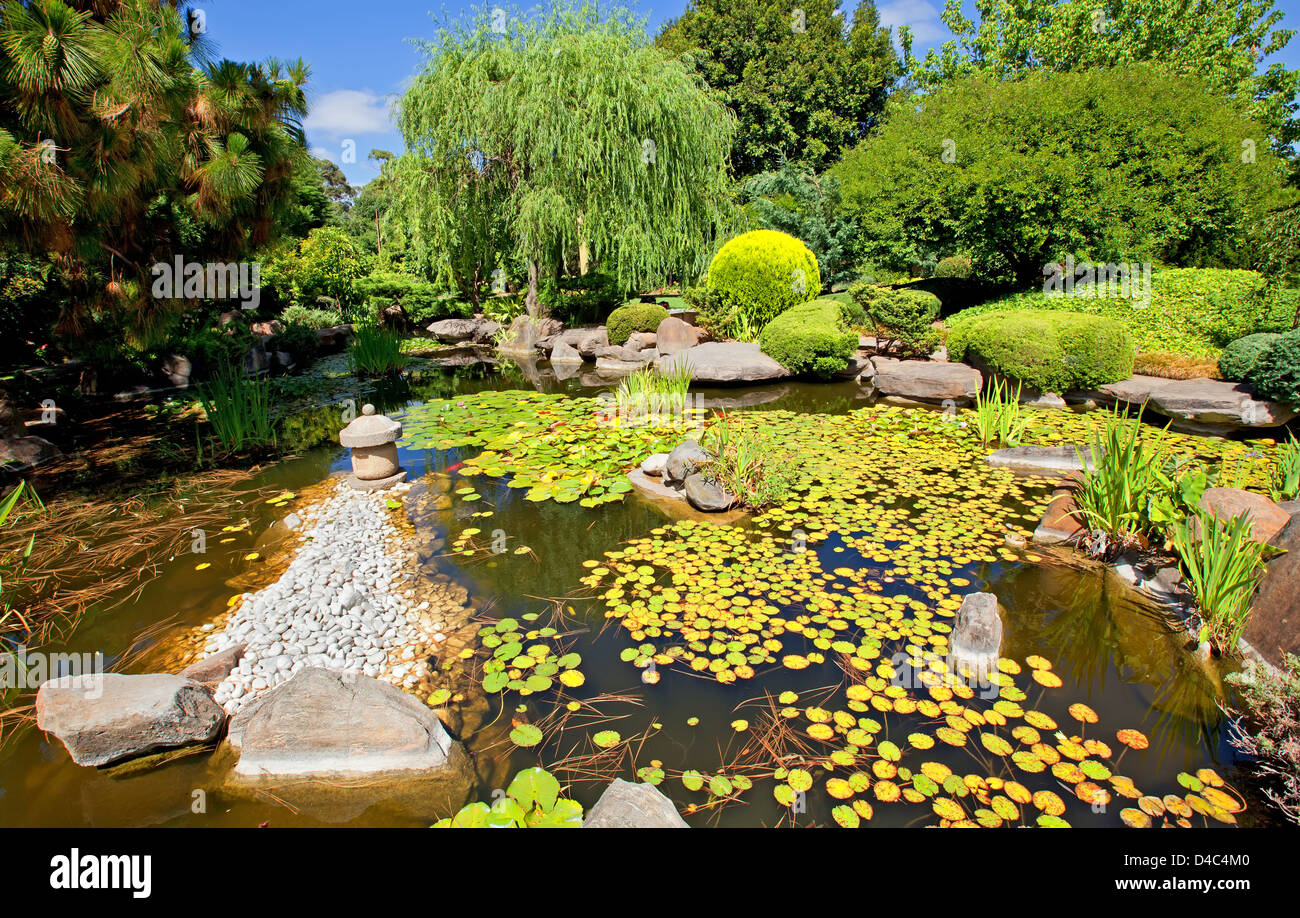 Japanese garden tree reed reeds water pond lily lilies for Japanese pond plants