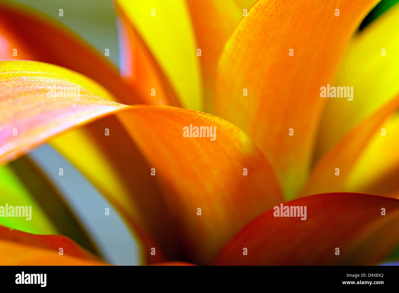 Closeup of a beautiful exotic flower as background stock photo closeup of a beautiful exotic flower as background izmirmasajfo Images