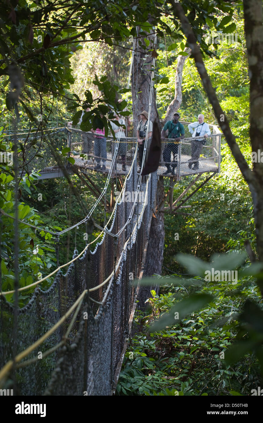 Iwokrama Canopy Walkway and ecotourists birdwatching with a local guide. Platform and connecting slung bridging. Guyana & Iwokrama Canopy Walkway and ecotourists birdwatching with a local ...