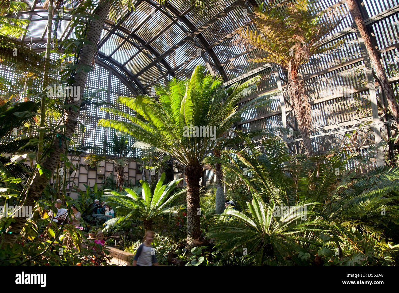 Tree Ferns At The Botanical Building At Balboa Park San Diego Stock Photo Royalty Free Image