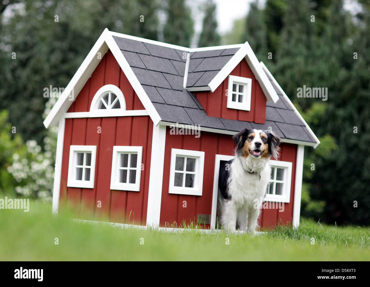 Luxury Dog Houses dog mara peers out of its luxury dog house type 'loenneberga' in