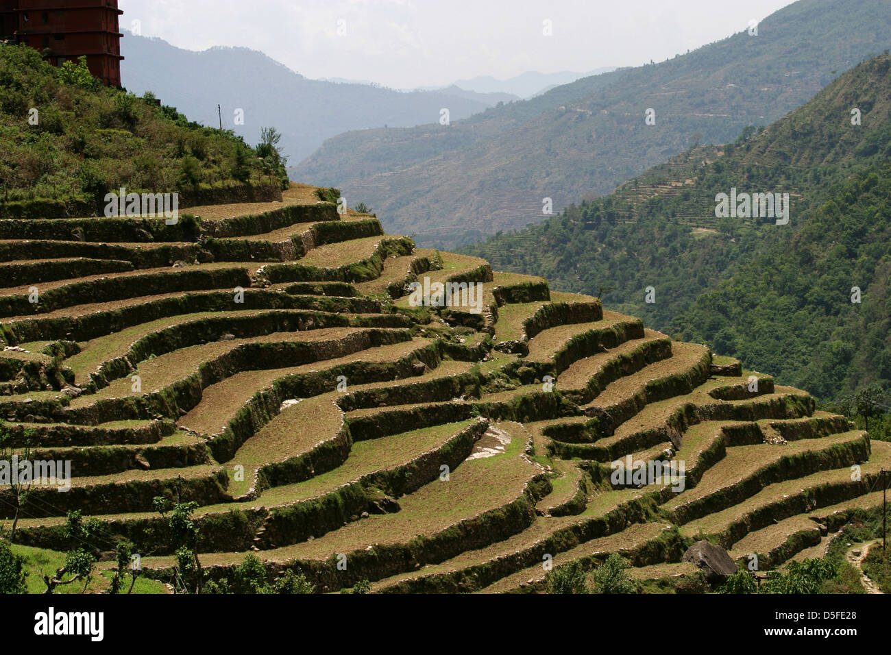 Terraced upland farming in the garhwal mountains stock for Terrace farming in india