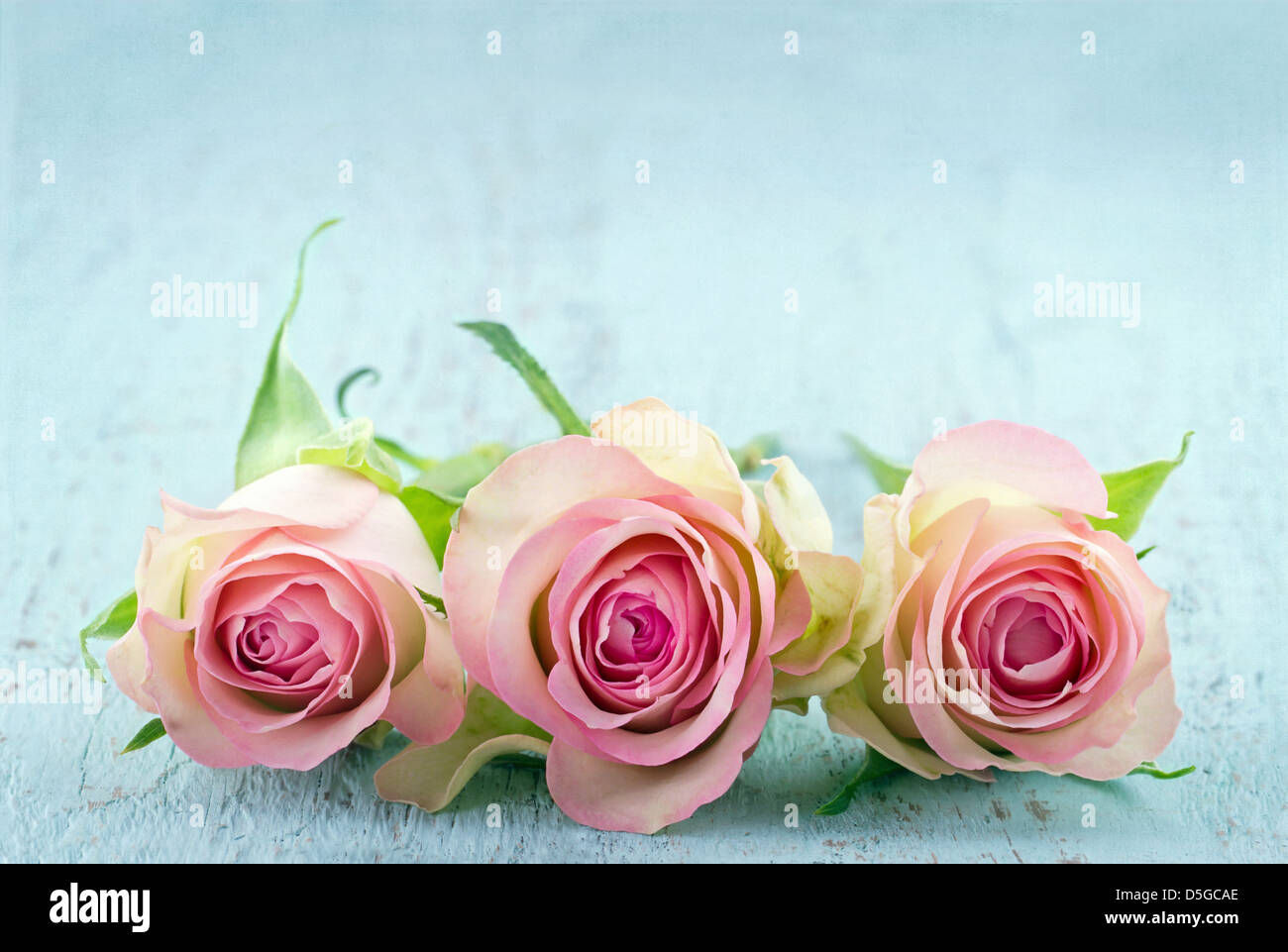 Three Pink Roses On Light Blue Wooden Shabby Chic Background With ...