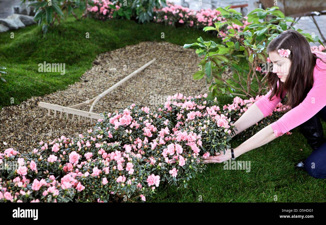 Mariella Bremer plants flowers in an Asian garden at the Stock Photo ...