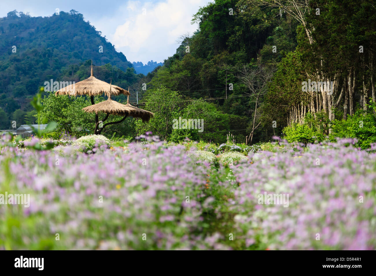 Flowers plantation in the countryside of Thailand Stock Royalty Free I