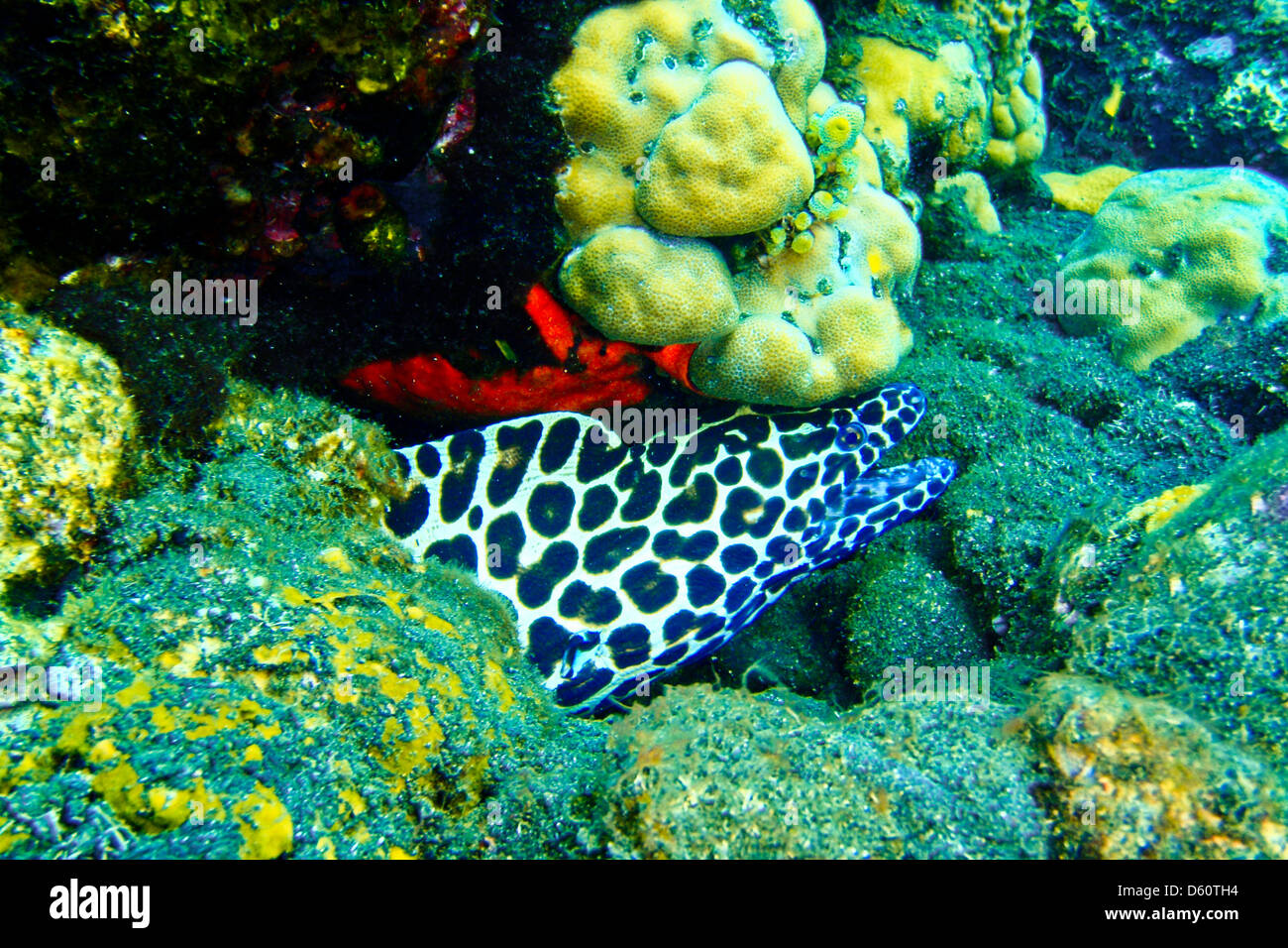 pictures of wild animals under the sea, Indonesia Stock Photo ...