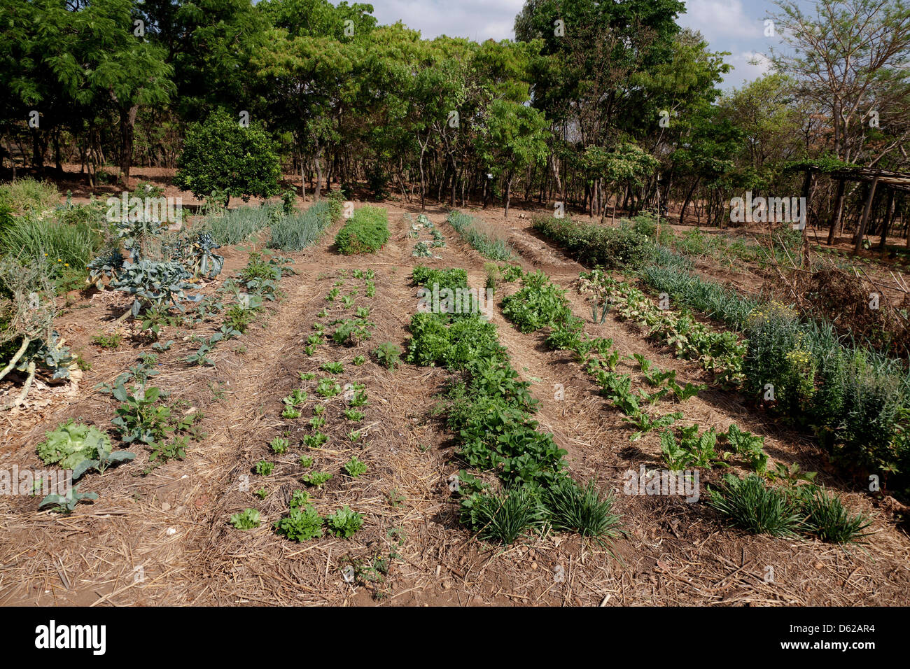 vegetable garden depicting companion planting and the use of