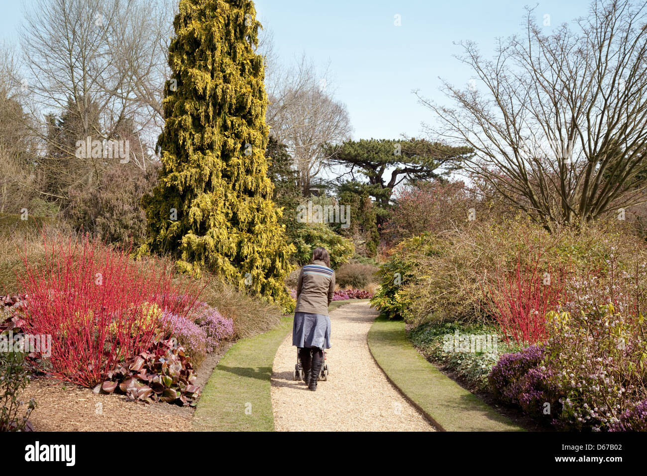 Pleasing A Woman Walking In The Winter Garden Cambridge Botanic Garden  With Luxury A Woman Walking In The Winter Garden Cambridge Botanic Garden Cambridge  Uk With Charming Rumours Covent Garden Also Mirror Gardening In Addition Garden Centre Kendal And White Garden Lanterns As Well As Plastic Bottle Garden Additionally Garden Maintenance From Alamycom With   Luxury A Woman Walking In The Winter Garden Cambridge Botanic Garden  With Charming A Woman Walking In The Winter Garden Cambridge Botanic Garden Cambridge  Uk And Pleasing Rumours Covent Garden Also Mirror Gardening In Addition Garden Centre Kendal From Alamycom