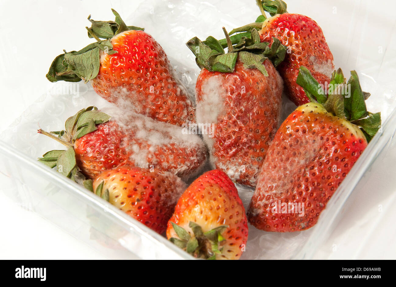 Rotten Strawberries rotten strawberries in...